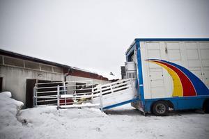 Lastningen har förberetts för att gå så smidigt som möjligt. Ensilage har lagts mellan ladugården och bilen för att skapa trygghet för djuren och minska risken för halka.