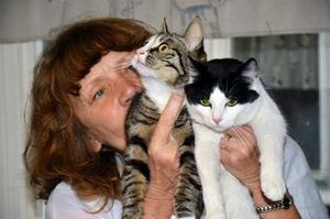 Hoppas få nya ägare. Gertic Gunnarsson håller om de övergivna katterna, som hon har valt att kalla Maritz och Marzell.