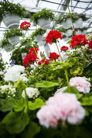 Blommor och växter hur sommaren till.