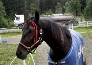 Det finns mycket hästar i Gudmundsbyn och man har en träningsbana i Huli. Tidigare brukade folk rida eller köra dit. Men enligt Jonas Toft är det inte många som törs det längre av rädsla för att möta lastbilarna.