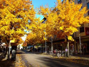 Den 28 oktober förra året hade jag ett ärende ner på stan tidigt på förmiddagen. När jag svängde in på Vasagatan var det bara att hala fram kameran och glädjas åt det jag såg. En lågt stående sol förgyllde såväl lövens färgprakt som tillvaron.
