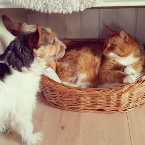Känslan när kattrackarn tagit korgen !! Om blickar kunde .... ;)