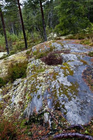 Tomter med mycket berg kan vara en fördel med tanke på vattenavrinningen.