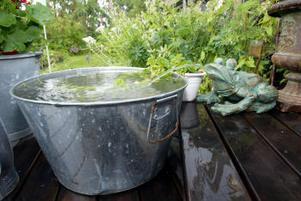 Och regnet det bara öser ner ...Trädgårdsgrodan får ta hand om stora mängder vatten.