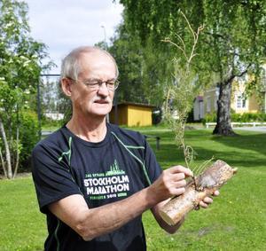 Grankvisten har börjat torka, och till på köpet gick den av. Men det råder inget tvivel om att den björk Birger Karlsson fällde på sitt vedskifte bär en kvist av gran!
