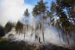 Bränder i skog och mark är den vanligaste utryckningen under sommaren.