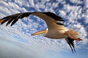 Vid lagunen Walvis Bay utanför den tyskinspirerade hamnstaden Swakopmund ligger den omskrivna restaurangen The Raft på en gammal ranglig träpir. Med båt härifrån kan man komma riktigt nära både säl, delfiner, flamingos och pelikaner.   Foto: Jörgen Ulvsgärd