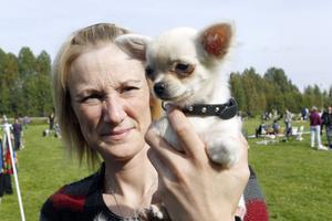 Chihuahuan Nova, bara 4,5 månader, var yngst och minst vid söndagens hundutställning. Tillsammans med en stolt ägare, Liselott Svahn, Bollnäs.