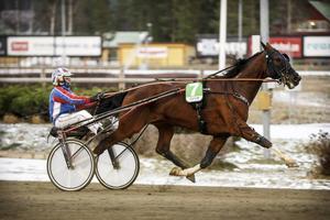 Bollnästränaren Thomas Lönn åkte till Östersund med två hästar. Han kunde inte klaga på utfallet – här seger med Panic Button och en tredjeplats med Olymp Amok i ett treåringslopp. På bilden är det Peter M Andersson som styr till segern.