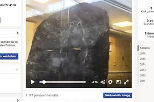 Björnen målad på en sten, här från TH:s livesändning på Facebook.