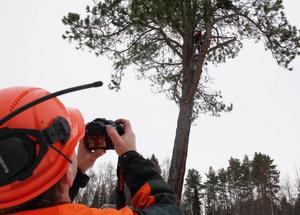Nils-Erik Sjöberg dokumenterade trädfällningen.