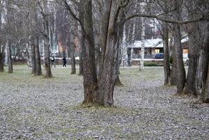PARKER. Kommunerna behöver öka tillgängligheten och förbättra kvaliteten av parker, grönstruktur och annan bostadsnära natur, tycker Folkhälsoinstitutet.