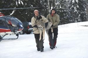 Per Ahlqvist och Tomas Strömset från Skandinaviska vargforskningsprojektet Skandulv. bär den knappt året gamla och 37 kilo tunga vargtiken som märktes i Galvenreviret.