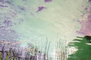 Algblomning som synts till i Kramfors