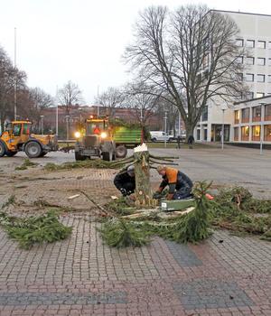 Leif Andersson och Christer Jansson tar bort stubben som blev kvar när vandalerna sågade av julgranen.
