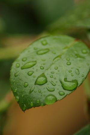 Efter en ordentlig regnskur tog jag den här fina bilden i trädgården.