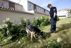 Polisens nye hundförare Mathias Pettersson genomsökte området för att säkra spår.