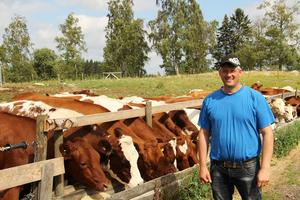 Lars Wallinder har ett fyrtiotal tjurar och kvigor på gården.