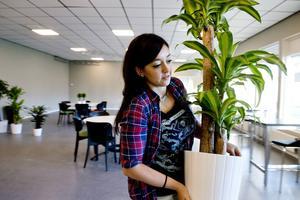 Layal Sandström ställer fram nyinköpta krukväxter som hon grupperar vid fönstren i det stora allrummet.