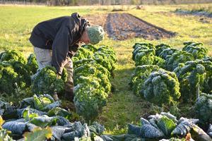 Eva Gustavsson njuter av att stå i grönsakslandet.