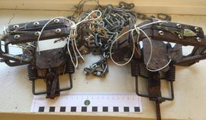 Det var fällor av typ rävsaxar som hittades gillrade i en norsk nationalpark nära svenska gränsen.
