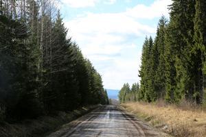 -Det är länge sedan det fanns kalhyggen, hormoslyr, dikning och hyggesplöjning, men fortfarande behöver skogen en stoppknapp för att  skogsmissbruket ska upphöra,  skriver Bengt Oldhammer i Skogslandskap farväl.