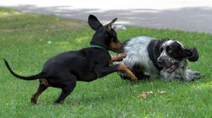 När Sheena och River träffas blir det mycket lek.