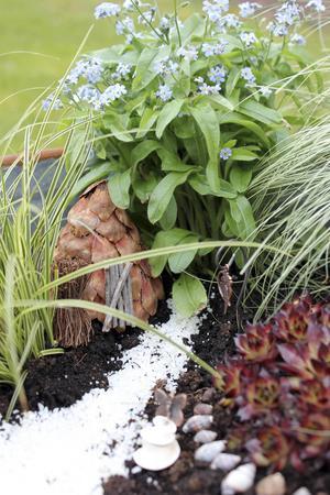 Den vita stenstigen leder in till ett kotthus som ligger lite dolt bakom de gröna växterna. Vem vet, kanske bor här en älva?