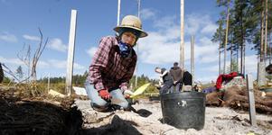 Sara Eby Palm från Uppsala universitet letar kvartsbitar i sanden.