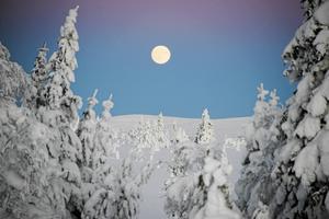 Det perfekta vinterlandskapet för en riktigt vit jul.