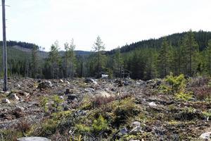 Det är miljöprövningsdelegationen vid Länsstyrelsen Dalarna som kommer att pröva och besluta om Bergvik skogs ansökan om en vindkraftpark - Hälsingeskogen - på Alfta finnskog.