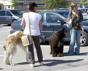 Inga-Britt Larsson, Bergvik, med sin Borzoi Sasha och Lina Aspegren, Söderhamn, med sin Afghanhund Solan.