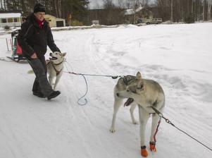 I dag är snön väldigt hård och isig, så det blir bara en kort tur runt huset.