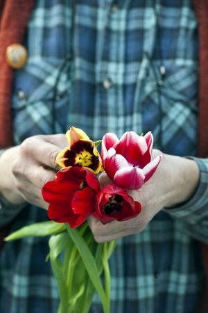 Gavota (gul och brunröd), Debutante (rosa med vita kanter) och den vackra blodröda Ile de France som har som en blomma i blomman i mörkblått.
