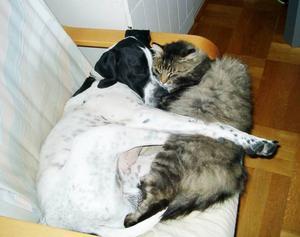 """BÅDA HAR SINA PERSONLIGHETER.""""Frågan om hund eller katt är fel ställd, enligt min mening. Hos oss gäller både och. Vår hund Ares sover ofta gott och mysigt tillsammans med katten Måns, som synes. Och själva vill vi inte prioritera någon av dem som det bästa husdjuret. De har sina personligheter, vare sig de är hund eller katt.""""Inskickat av Gunnel Toft, Svenstavik."""