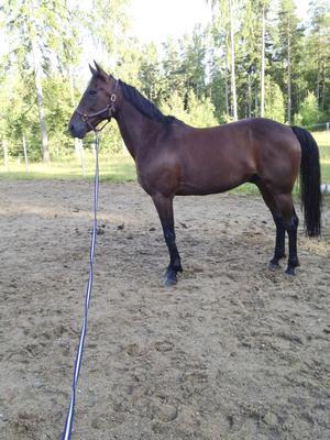 Photo, som annars är en väldigt lugn och trygg häst, är märkbart uppskakad av händelsen.
