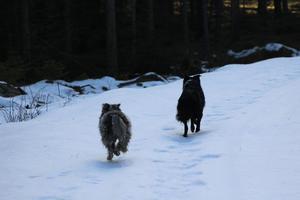 Lupus & Ianira i full fart mot våren!!