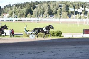 Jörgen Westholm lyfter spöt i en segergest sedan Odin Tabac blivit svensk mästare för kallblod.