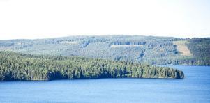 Enligt Malin Sahlin på Naturskyddsföreningen är det stor risk att skogen på Sollen kommer att huggas ner om den säljs till ett bolag som inte är FSC-certifierat.