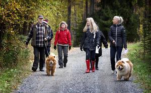 En tipspromenad tillsammans med chowarna var ett lika självklart som utmärkt tillfälle att låta såväl hundar som människor bekanta sig med varandra.