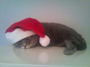 Vår katt Billy är 15 år, blev så trött när han skulle posera som tomte. Somnade, spinnande med luvan på sniskan.