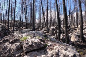 Så här såg det ut efter branden i maj 2015. Foto: Lars-Ove Wikars