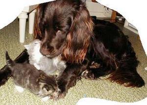 """DANTE ÄR SNÄLL MOTALLA SMÅ UNGAR.""""Detta är vår blandrashund Dante med två kattungar vi hade för två år sedan. Dante är alldeles otroligt snäll mot alla djurungar och framför allt små katter. Han kan stå som fastfrusen länge och bara titta när de är nyfödda och senare får man ofta se sådana här situationer. """" Inskickad av Ninni Landgren."""