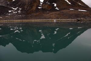 Nyanser. Färgerna och kontrasterna av naturen är magisk. Foto:KjellHansson/Talu