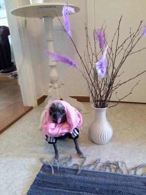 Glad påsk önskar Maria Karlsson och hunden Chico!