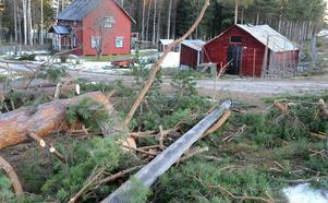 Vid en gård i Söderomsjön hade flera träd fallit.