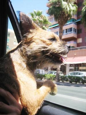 """""""Här kommer en bild som talar för hund – människans bästa vän. Hundar är ett gott sällskap och härliga att vara tillsammans med. De är sociala och godhjärtade!"""" Inskickat av  Marie Lewholt."""