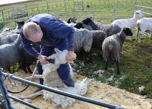 All ull måste bort, även under hakan och på halsen.