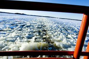 Isen är omkring 25 centimeter tjock vid hamnen. I isrännorna blir den tjockare när det fryser på. Men isvallarna utanför Storjungfrun kan bli betydligt tjockare.