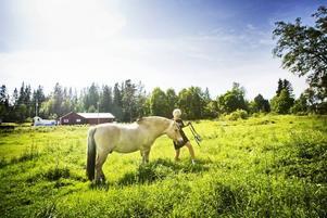 ÖPPET LANDSKAP. Fler hästar gör att markerna är öppna och inte växer fast. Så här ser det ut i Järvsta en solig augustidag när Allram betar.